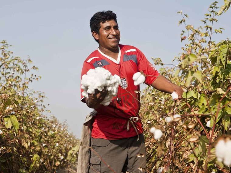 Why Peruvian Pima Cotton?