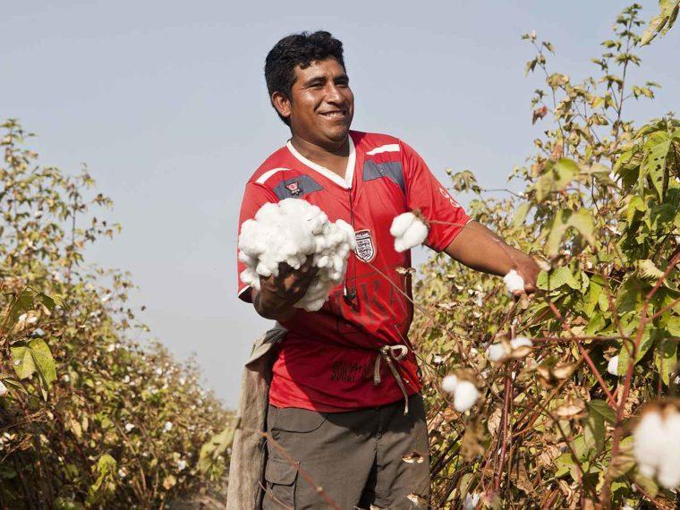 Why Peruvian Pima Cotton?